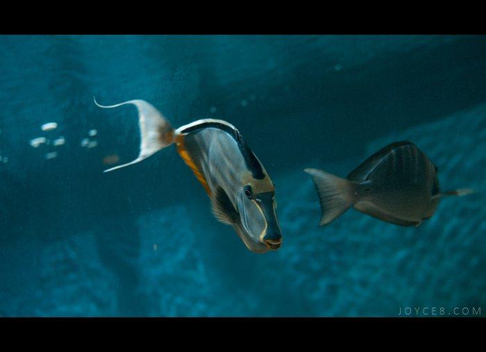 野柳海洋世界,野柳海洋世界海洋劇場表演時間,門票交通