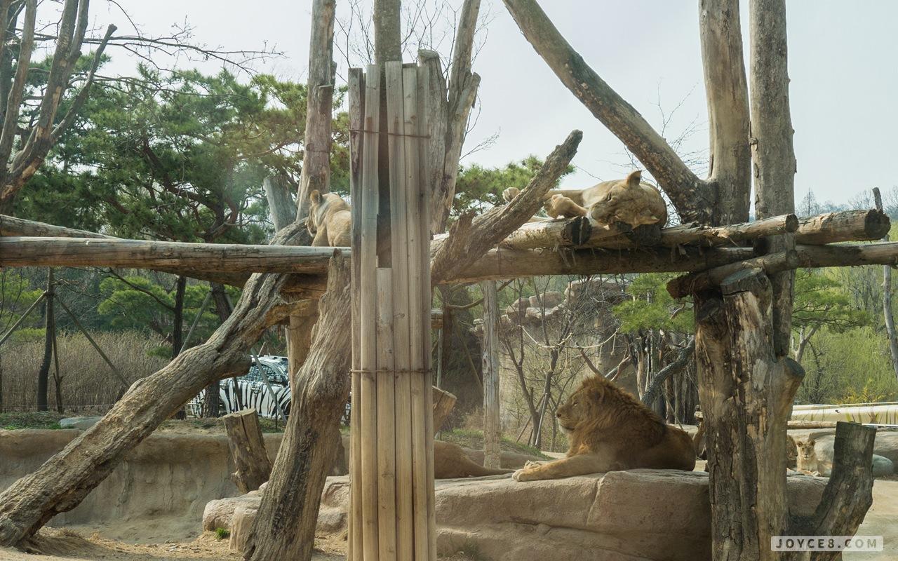 愛寶樂園,愛寶樂園猛獸,愛寶樂園野生動物,愛寶樂園野生動物世界